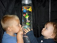 How many fish can you see in Abacus' bubble tube?